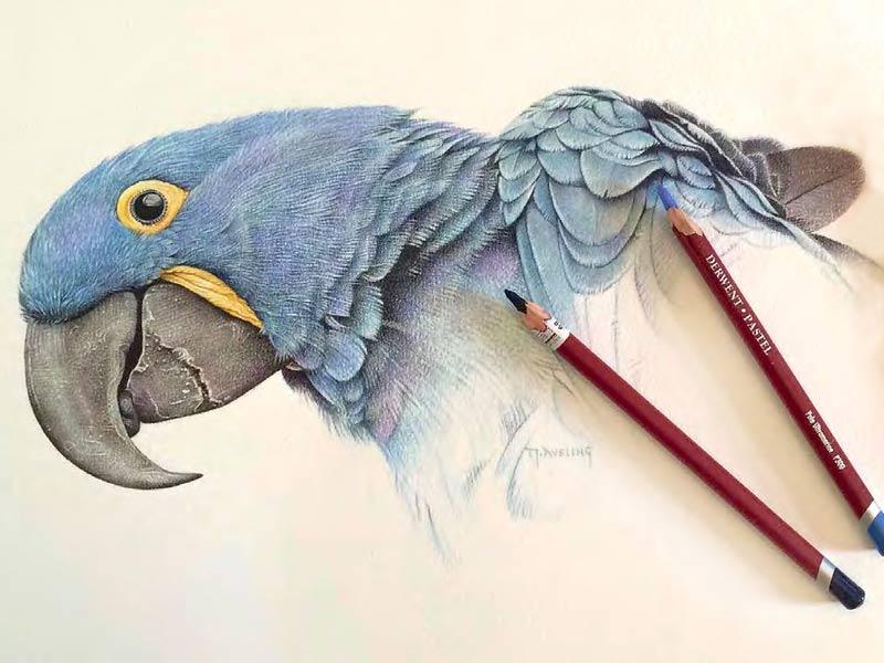 Пастельные карандаши Derwent рисунок